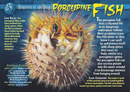 Porcupine Fish front