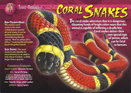 Coral Snake front