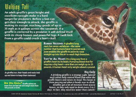Giraffe back