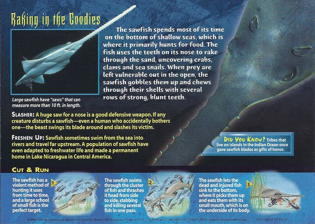 File:Sawfish back.jpg