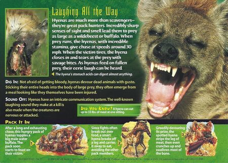 Spotted Hyena back