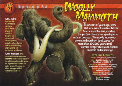 Wooly Mammoth front