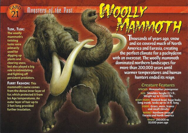 File:Wooly Mammoth front.jpg