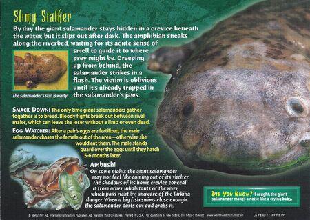 Giant Salamander back