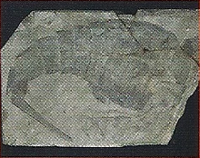 Eurypterids Back Image