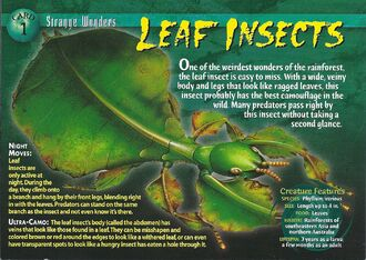 Leaf Insects front