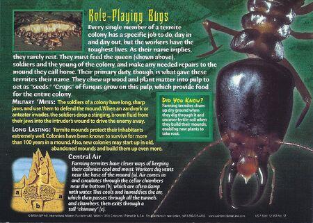 Farming Termite back