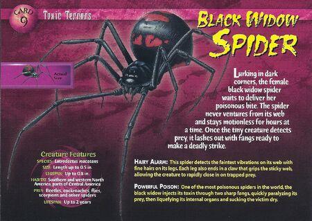 Black Widow Spider front
