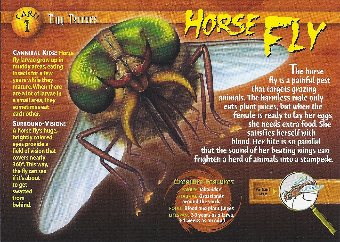 front horse fly front