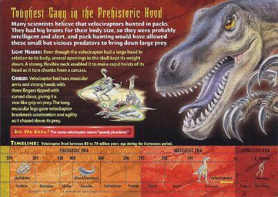 Velociraptor back