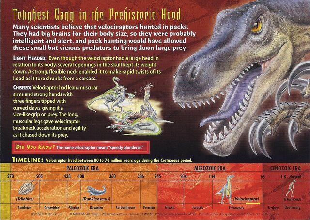 File:Velociraptor back.jpg