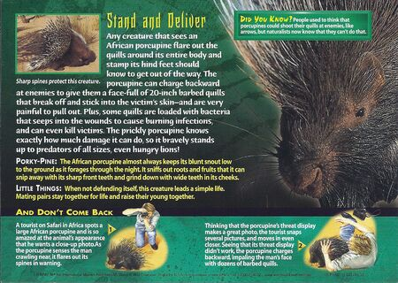 African Porcupine back