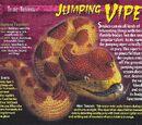 Jumping Viper