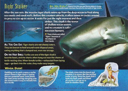 Tiger Shark back