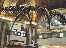 Carnotaurus Back Image