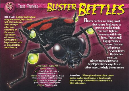 Blister Beetles front