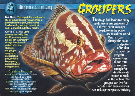 Groupers front