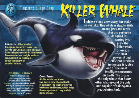 Killer Whale front
