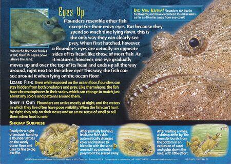Flounders back