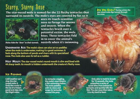 Star-Nosed Mole back
