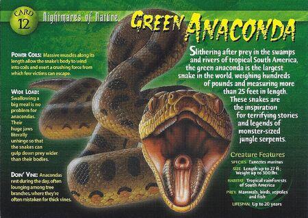 Green Anaconda front