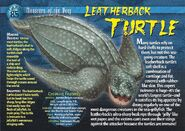 Leatherback Turtle front