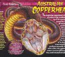 Australian Copperhead