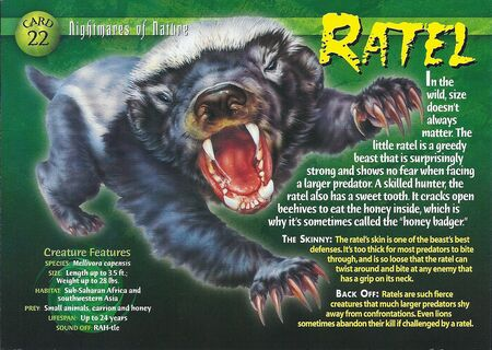 Ratel front