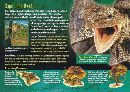 Frilled Lizard back