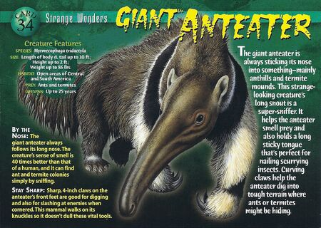Giant Anteater front