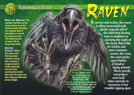 Raven front