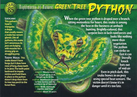 Green Tree Python front