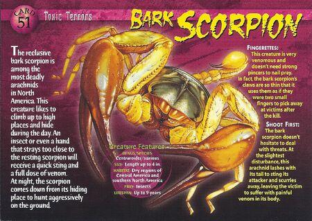 Bark Scorpion front
