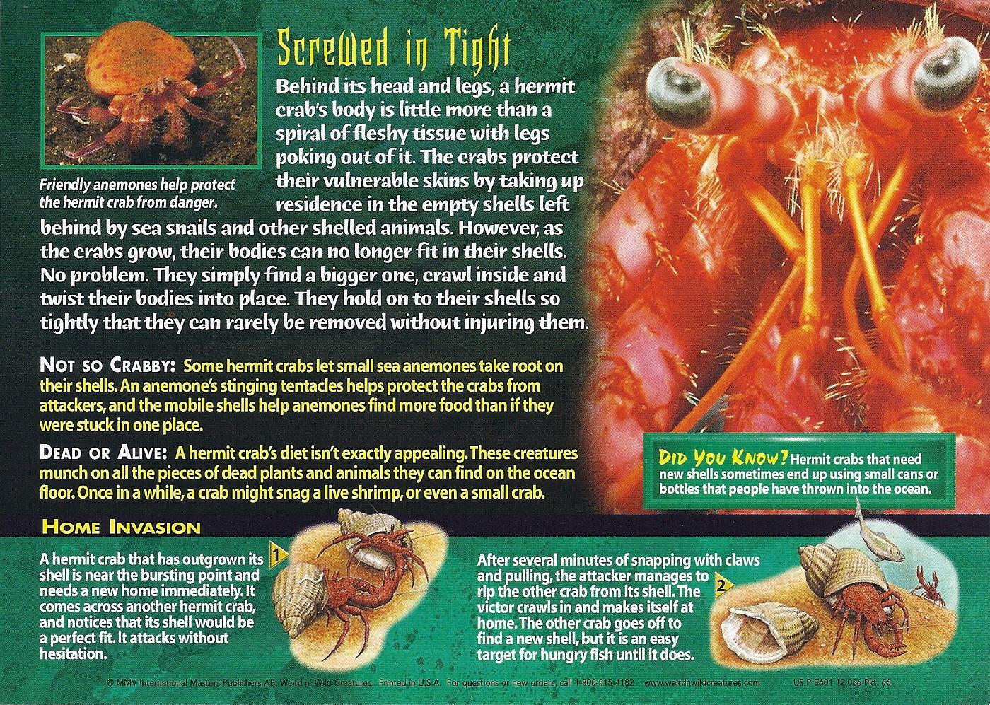 Image - Hermit Crabs back.jpg | Wierd N\'wild Creatures Wiki | FANDOM ...