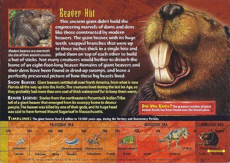 Giant Beaver back