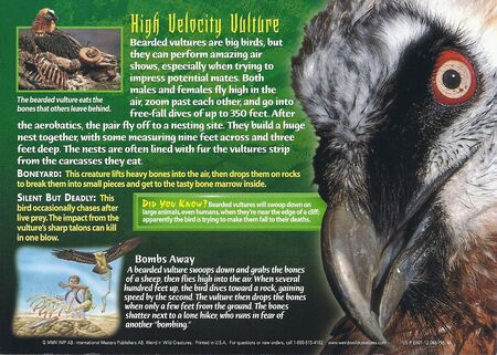 Bearded Vulture back