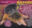 Solenodon