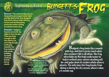 Budgett's Frog front