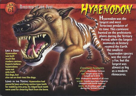 Hyaenodon front