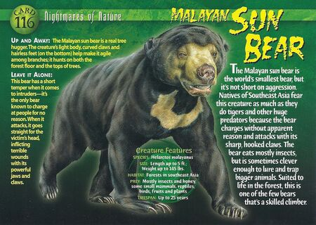 Malayan Sun Bear front