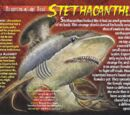 Stethacanthus
