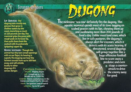Dugong front