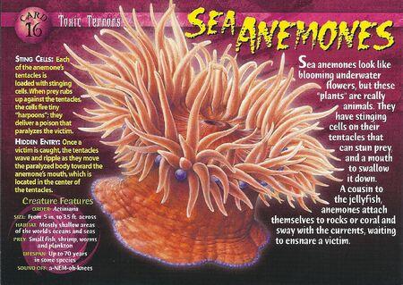 Sea Anemones front