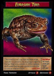 Eurasian Toad