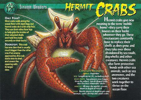 Hermit Crabs front