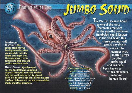 Jumbo Squid front