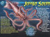 Jumbo Squid