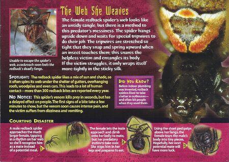 Redback Spider back