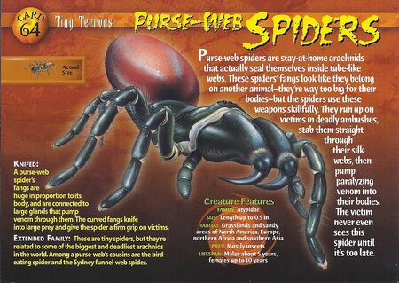 Purse-Web Spiders front