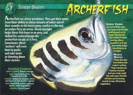 Archerfish front